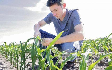 Jon Yaklich in a corn field