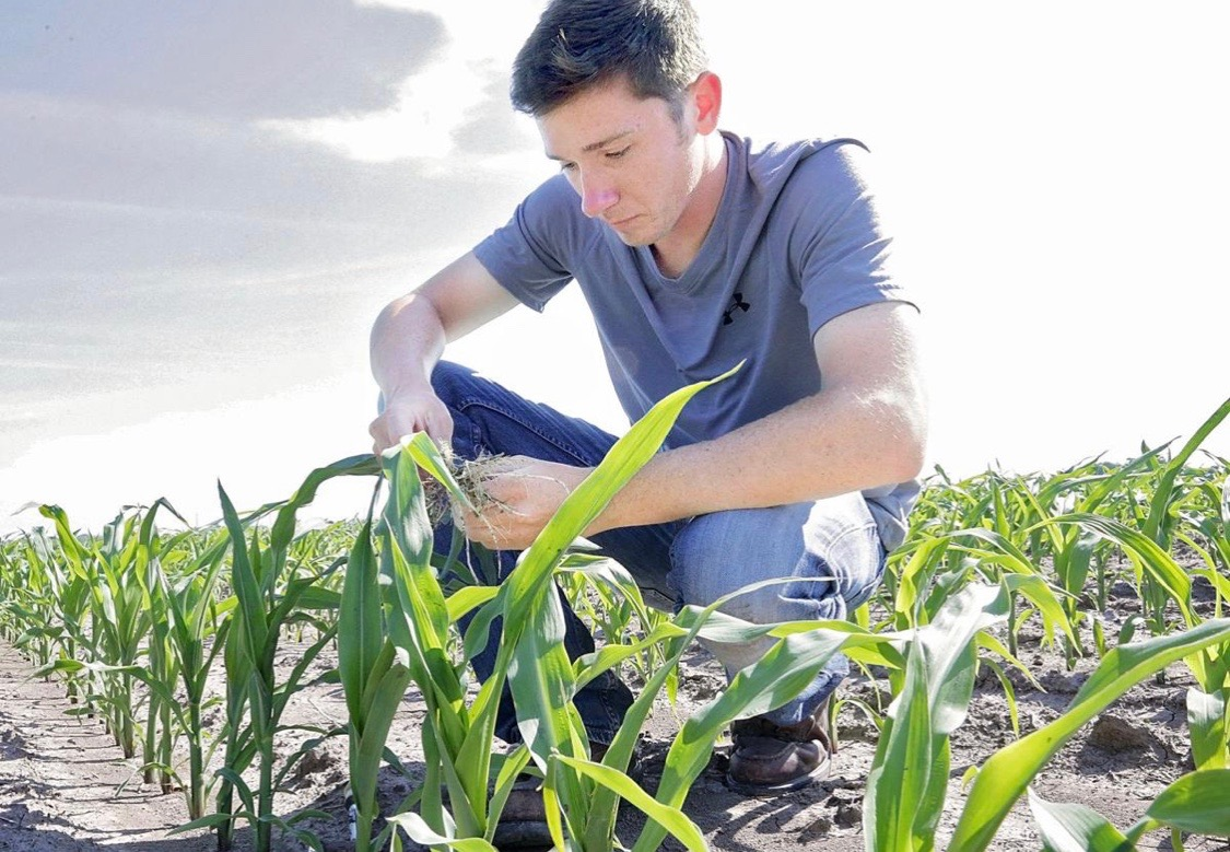 Jon Yaklich scouts for bugs and weeds during his internship with Ag View FS in Princeton.